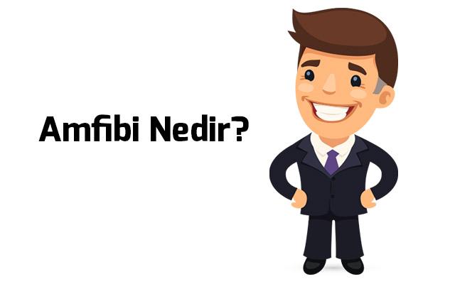Photo of Amfibi Nedir?